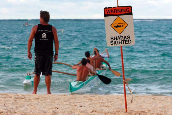 hai beißt deutsche bei hawaii